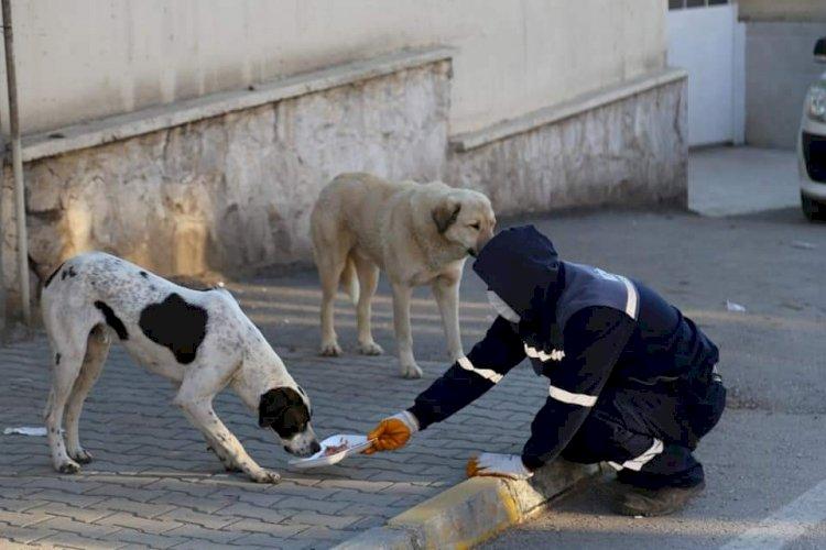 Nizip Belediyesi Sokak hayvanlarını unutmuyor